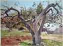 Bon's Apple Tree